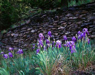 GF-1056 - Lilien vor Legesteinmauer