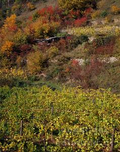 GF-1083 - Herbst im Weingarten