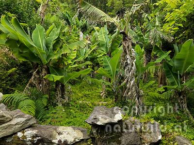 16AFL-5-05 - Verwilderte kleine Plantage