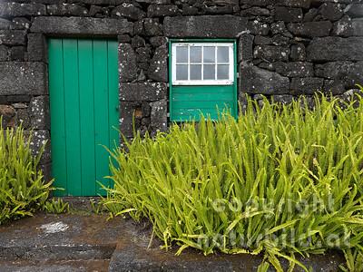 Häuschen, aus schwarzem Vulkangestein, vorne Farne, Insel Pico, Azoren, Portugal,
