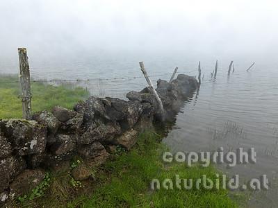 Weidezaun in den See, See im Nebel, Insel Pico, Azoren, Portugal,