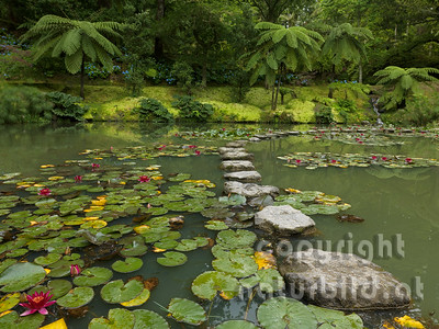 Botanischer Garten, Insel Sao Miguel, Azoren, Portugal,