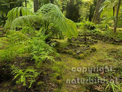 Botanischer Garten, Pfade zwischen den Pflanzen, Insel Sao Miguel, Azoren, Portugal,