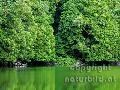Spiegelung der Uferbewuchses im Wasser, Insel Sao Miguel, Azoren, Portugal,