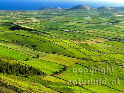 Schachbrettartige Felder, hinten kleine Vulkankegel, Serra do Cume, Insel Terceira, Azoren, Portugal,