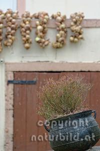 Ländliche Idylle, Tradition, Gusseiserner Topf, Kräuter, hinten Zwiebel beim trocknen, Insel Terceira, Azoren, Portugal,