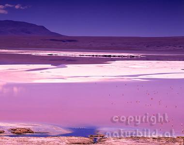 GF-1138 - Laguna Colorada