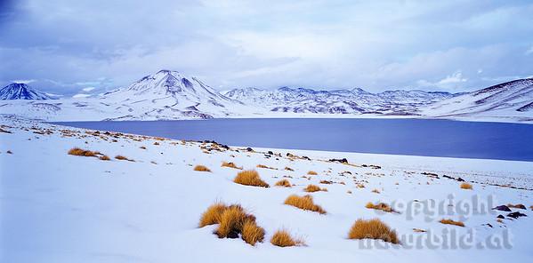 PF-794 - Laguna Miscanti im Schnee - 1
