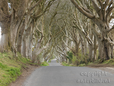 15-IR-01-01 - Dark Hedges - 1