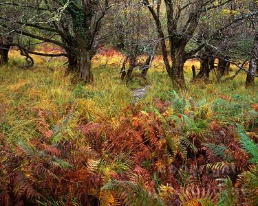 GF-1193 - Irlands Herbst