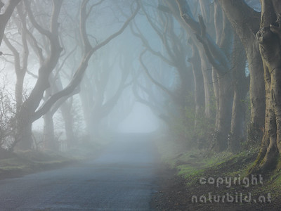 15-IR-02-01 - Dark Hedges im Nebel
