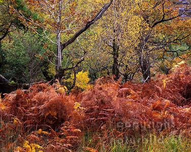 GF-1192 - Herbst im Killarney Nationalpark