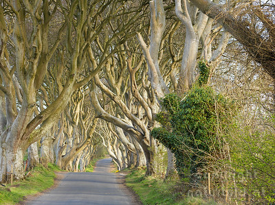 15-IR-01-09 - Dark Hedges - 3