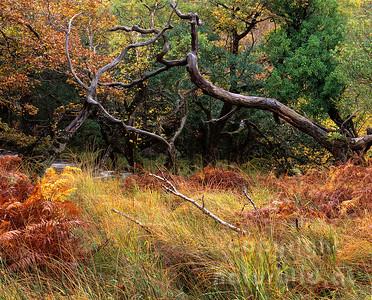 GF-1194 - Spätherbst im Killarney Nationalpark