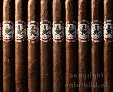 MF-289 - Hoyo de Monterrey Zigarre