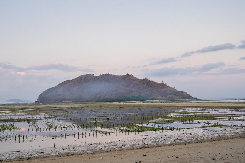 Die Algenfelder vor unserer Unterkunft. Bei Ebbe treten sie zutage, bei Flut glänzt das Wasser wunderschön türkisblau.
