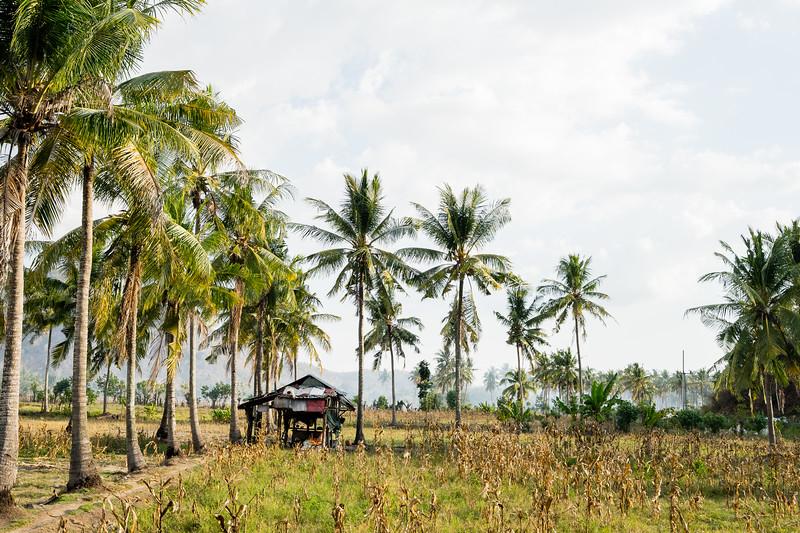 Die Straßen sind gesäumt von Palmen und Feldern, zwischendrin stehen einfachste Behausungen.