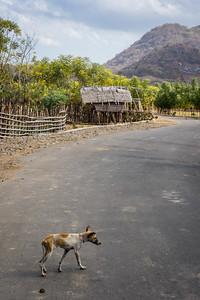 Straßenhunde gehören zum Straßenbild. Hier: ein besonders trauriges Exemplar
