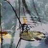 291A973601_DAP_Classics