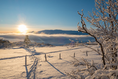 Kvamskogen, vinter