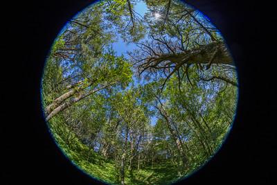 Trær, Fisheye