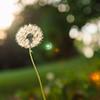 Fotolabor : frisch entwickelte Bilder querbeet