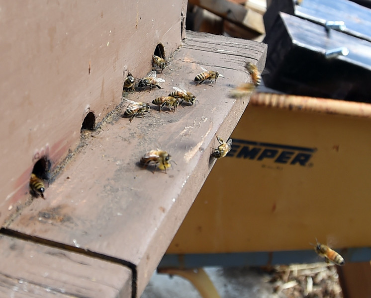 Dying Bees