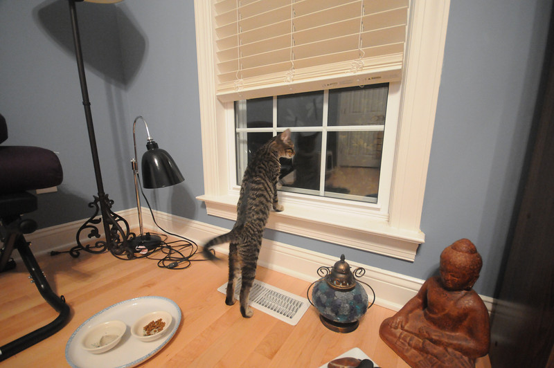 Looking out the window.