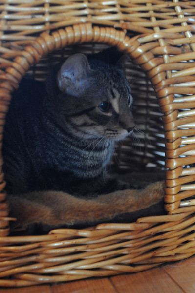 Bill - being calm in the bottom part of the double decker basket.
