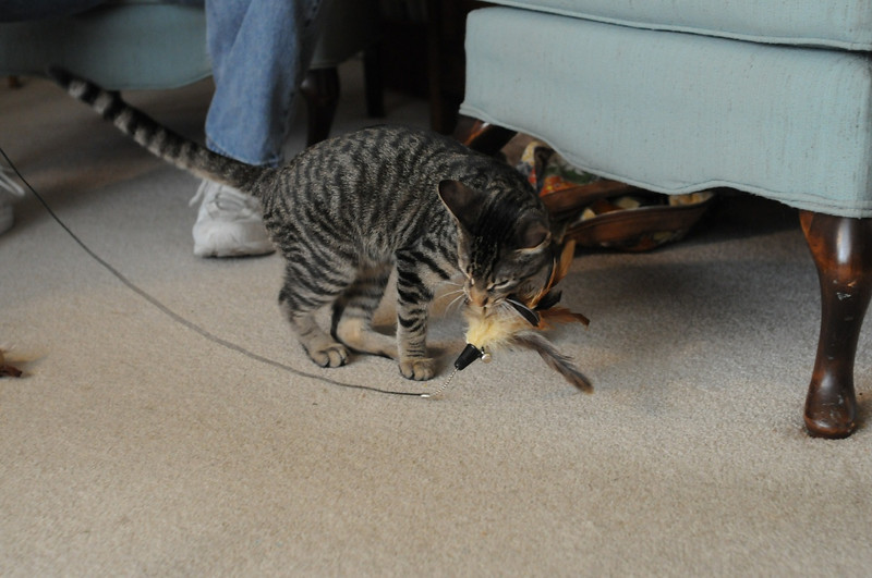 Getting ready to take his prey off.