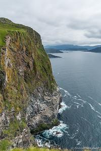 Sule - Morus bassanus - Northern gannet