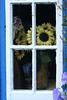 Sunflowers in window, Adare, Ireland