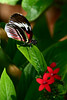 Butterflly and flower, Butterfly World, FLa