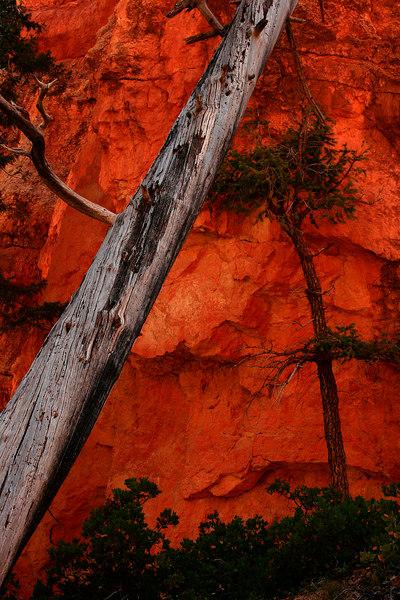 Loop Trail in Bryce Canyon, Utah