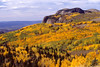 Golden aspens in autumn near Brazos Cliffs, Tres Piedras, New Mexico
