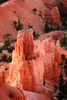 Hoodoos in Bryce Canyon, Utah
