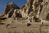 Three horses & tufa formations in Goreme, Cappacocia, Turkey