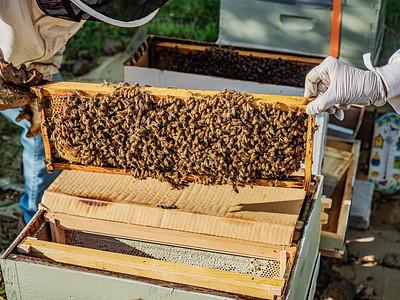 Transferring tray 1 from the box