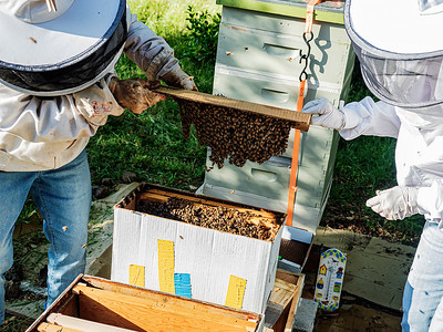 Lifting the lid brings third of the bees