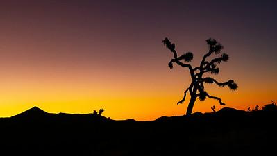 Joshua Tree dawn