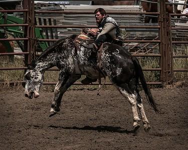 Bronco Rider - Russian River Rodeo