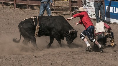 Bull Fighters - Russian River Rodeo
