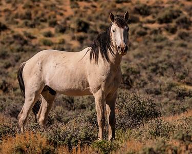 Wary stallion