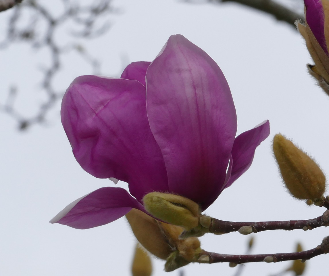 I think this was the best magnolia photo of the day.