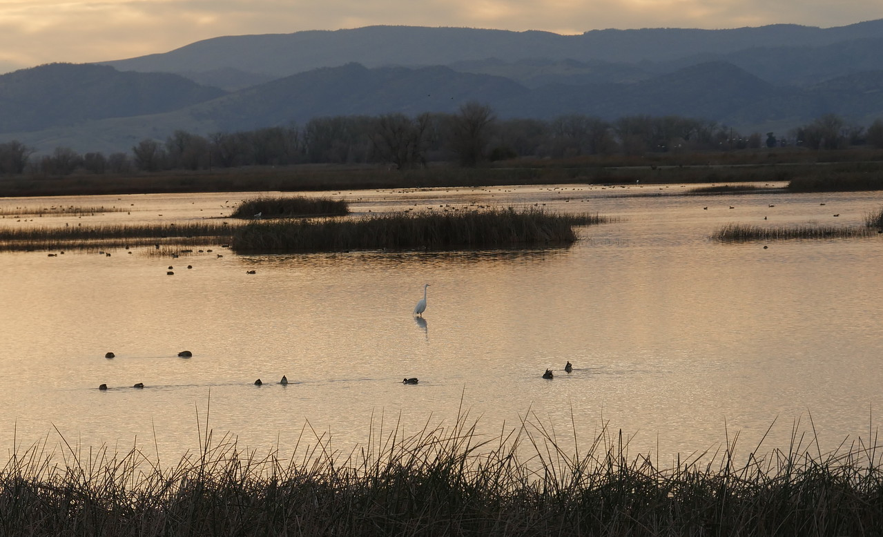 A cold January morning when we visited the Sacramento Wildlife Refuge.