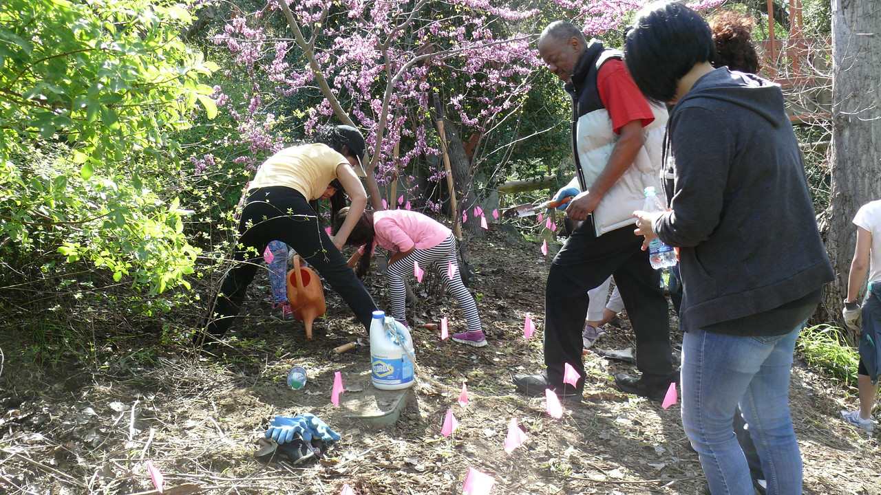 Lesley continues to be very involved in habitat restoration activities.  Here, volunteers are working to plant native plants along Walnut Creek in Civic Park.
