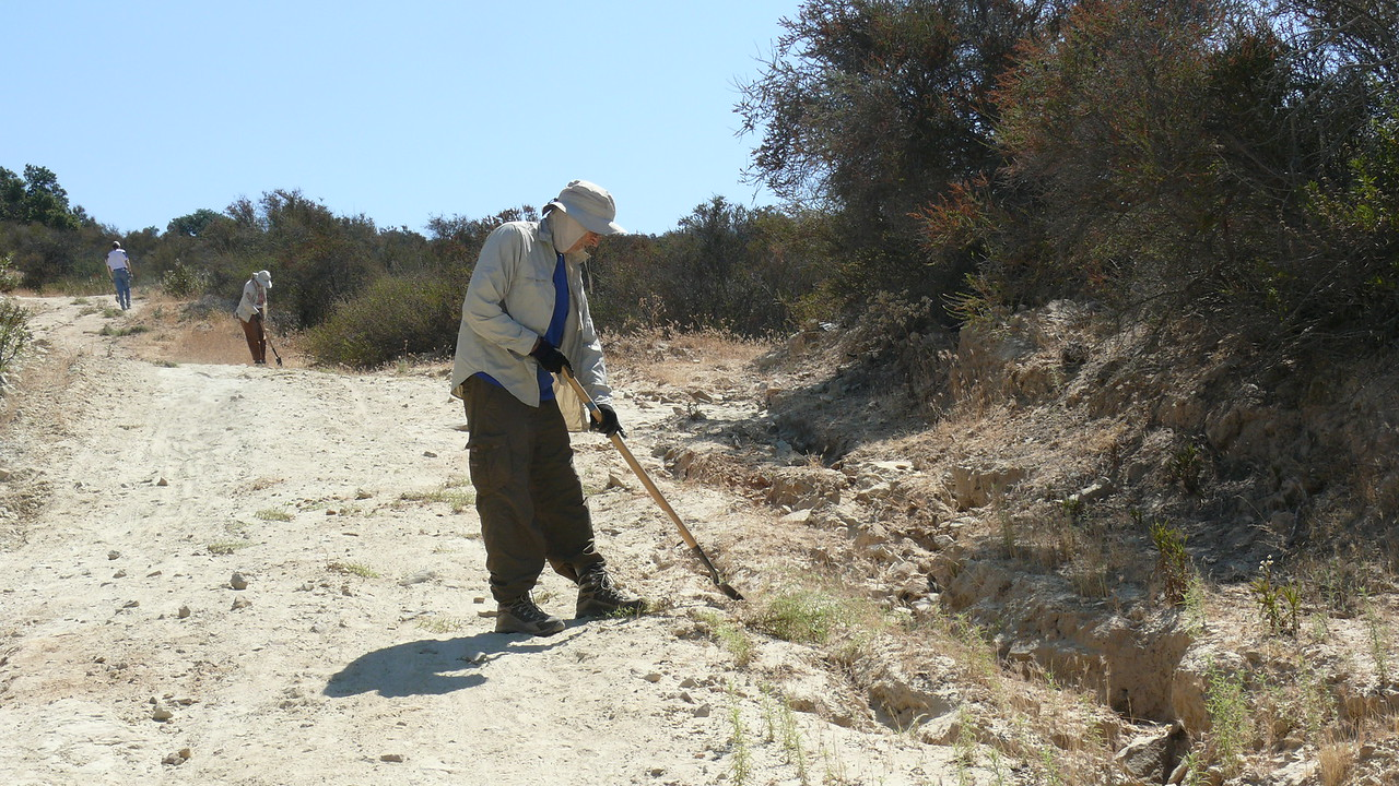 Lesley's every Tuesday group does a variety of habitat restoration tasks like removing invasives like Dittrichia.