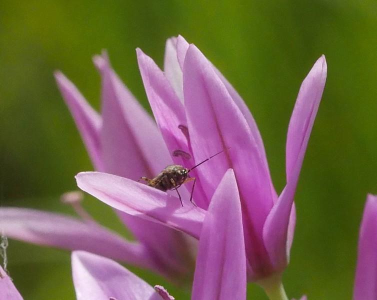 Bugs too.
