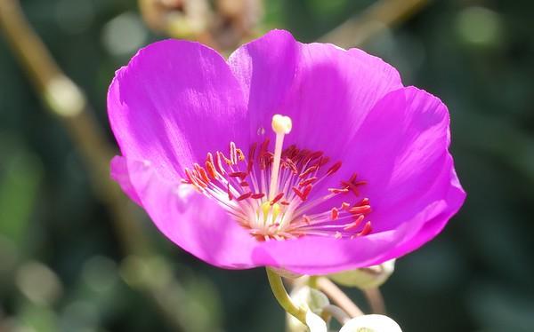 5/12/3016 - neighborhood flowers close up