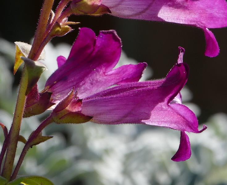 A closeup of a single flower.